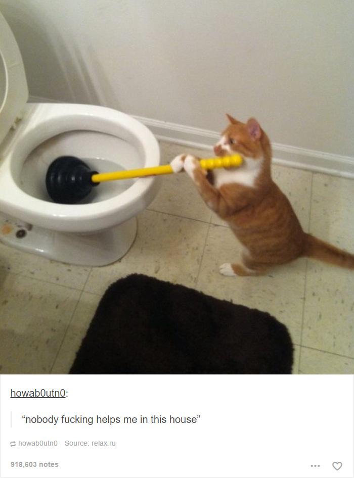 gato-empreguete