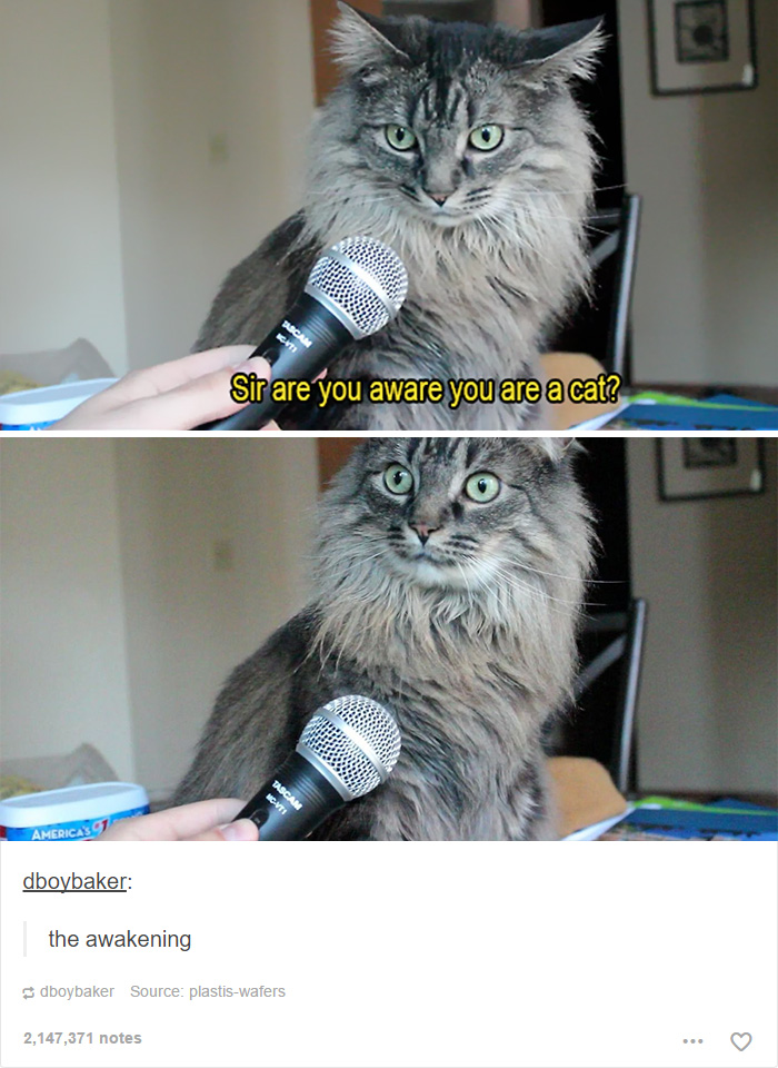 gato-senhora