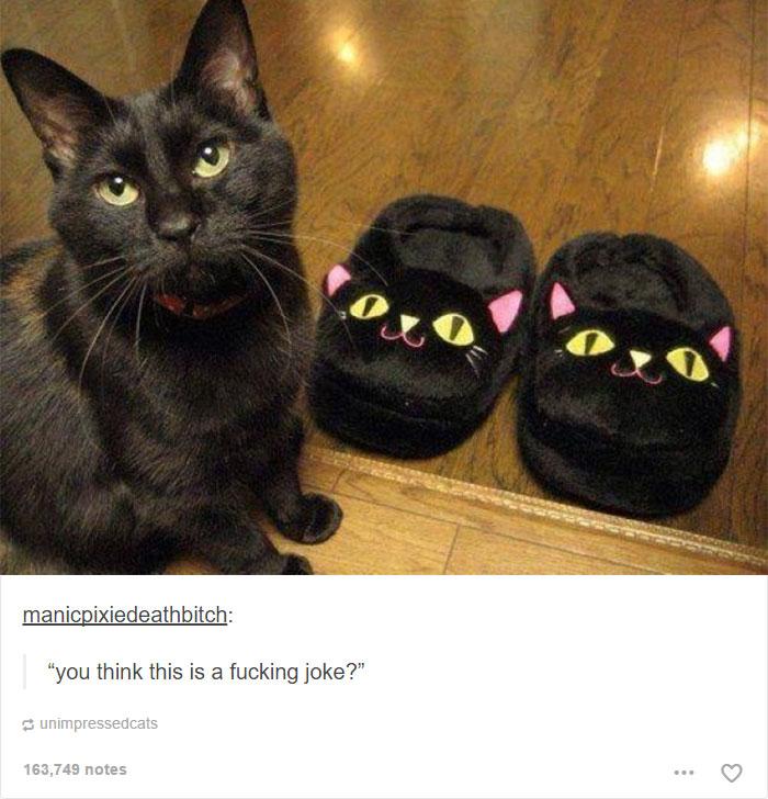 gato-srsly